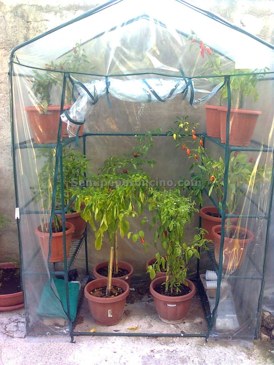 Peperoncini la guida completa sulla coltivazione del for Vasi per semina